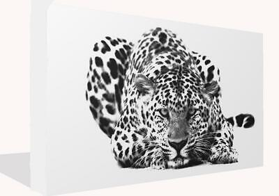 Large Black and White Big Cat Leopard  Canvas Wall Art Print Picture Poster