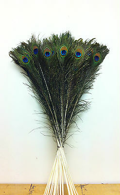 LONG Natural Peacock Eye Feathers 30 - 35 inch. UK Stock.
