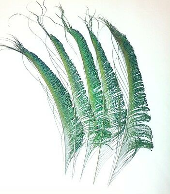Peacock Sword Feathers 12 inches Iridescent Green Colour. UK Stock