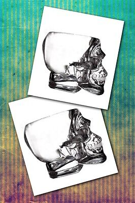 Crystal Head Vodka Skull Shot Glass (New Set of 2 Glasses) famous by Dan Aykroyd