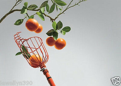 NEW! Fresh Fruit Picker Basket Orange Peach Plum Apple