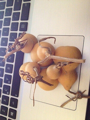 5pcs BOTTLE GOURDS (DRIED & CLEANED), From China,Free shipment