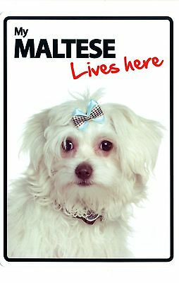 My Maltese Lives Here - Fun Sign