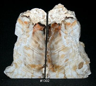 """Exquisite Petrified Wood Bookends 8 1/2"""" wide x 7"""" tall x 3 1/4"""" thick 8.6 lbs."""