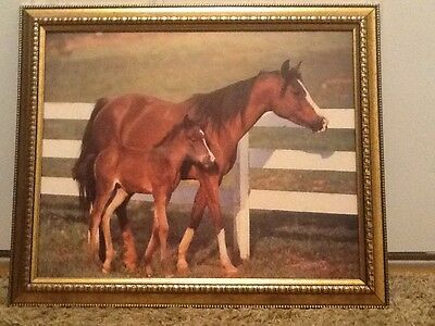 horse picture in frame