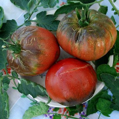 Vegetable - Tomato - Purple Passion - 75 Seeds - Large Packet