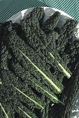 Vegetable - Borecole - Nero di Toscana - 5000 Seeds - Large
