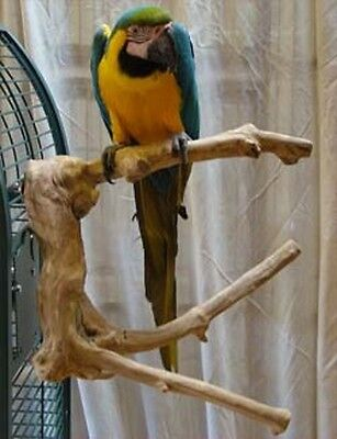 Parrot Perch Pet Bird Perch Cage Mount Large Multi Branch Java Wood Extra Large