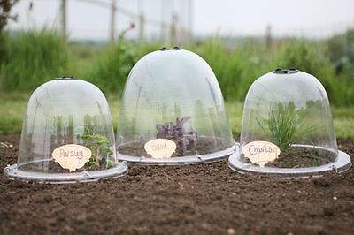 King Size Victorian Bell Cloche x 2 Garden Crop Plant Veg Frost Protection