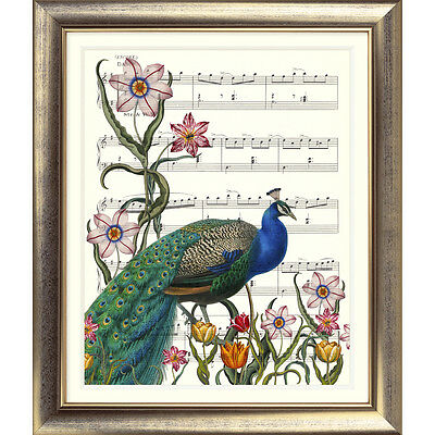 ART PRINT ORIGINAL VINTAGE MUSIC SHEET Page PEACOCK Flowers Garden Old Picture