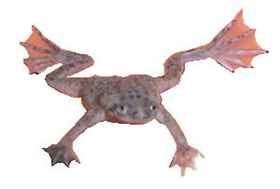 1 Pet Dwarf Frog with Food - Redeem a FREE Coupon and He's Shipped to Your Door
