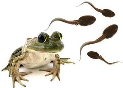 1 Leopard Frog TADPOLE + Food:Redeem FREE Coupon and He's Shipped to Your Door