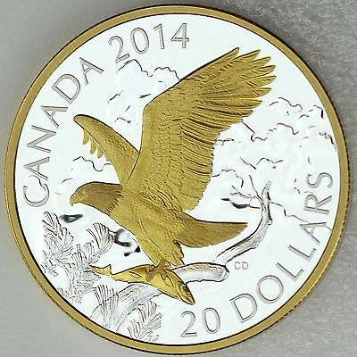 Canada 2014 $20 Bald Eagle Perched with Fish 1 oz Pure Silver Proof Gold Plating