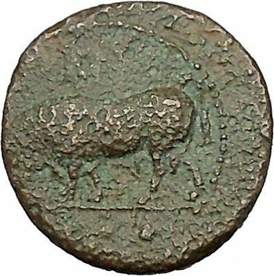 Gela in Sicily 420BC Bull & River god Gelas Very rare  Ancient Greek Coin i41356