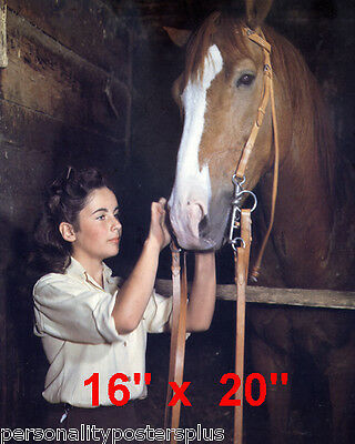 "Elizabeth Taylor~National Velvet~Color~Horse~Photo~Poster~ 16"" x 20"""