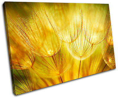 Flower Floral SINGLE CANVAS WALL ART Picture Print VA