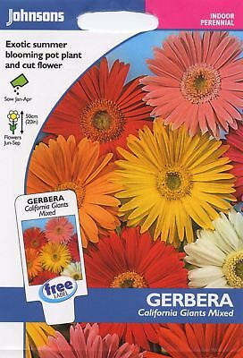 Johnsons Pictorial Pack - Flower - Gerbera California Giants Mixed - 25 Seeds