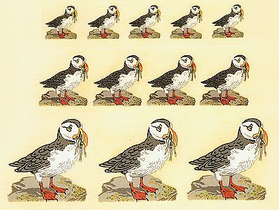 Puffin Decals Tranfers Set Of Unique Retro Axon & Harrison Designs Various Sizes