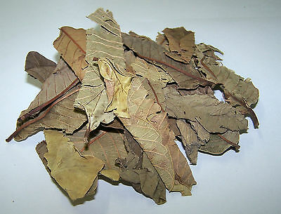 Dried Guava Leaf Litter - A natural food for all Freshwater Shrimps