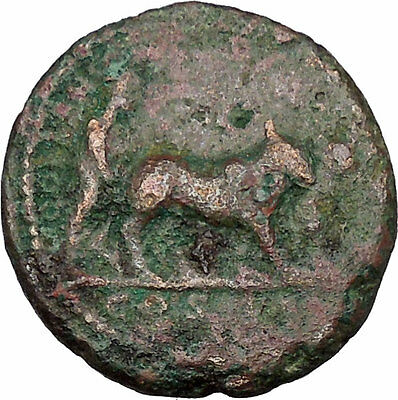 COMMODUS son of Marcus Aurelius as priest w oxen Ancient Big Roman Coin i42979