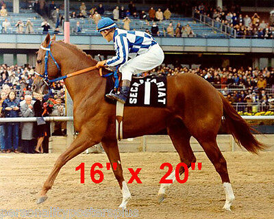 "Secretariat~Triple Crown Winner~Ron Turcotte~Poster #2~Photo~16"" x 20"""