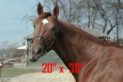 "Secretariat~Triple Crown Winner~Horse Racing~Poster~Portrait~Photo~20"" x 30"""