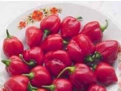 Vegetable - Pepper (Chilli) - Habanero Red - 20 Seeds