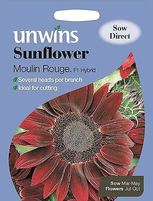 Unwins Pictorial Packet - Flower - Sunflower Moulin Rouge - 16 Seeds