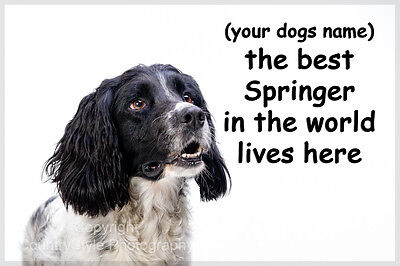 Springer Spaniel Dog  Personalised funny Fridge Magnet Perfect New Birthday Gift