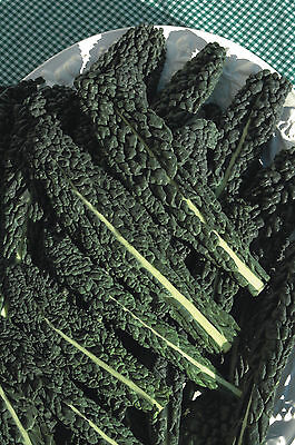 Vegetable - Borecole - Nero Di Toscana - 300 Seeds - Economy