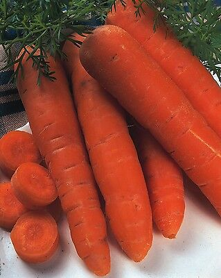 Vegetable - Carrot - Autumn King 2 - 5000 Seeds