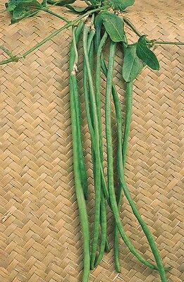 Vegetable - Climbing French Bean - Yard Long - 50 Seeds