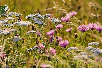 Wild Flower -  Meadow Tussock Seed Mix for Wild Animals 4g
