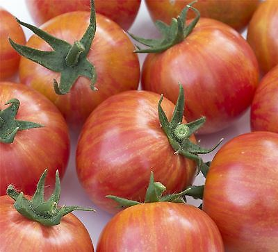 Vegetable - Tomato - Artisan Pink Bumble Bee - 50 Seeds - Large