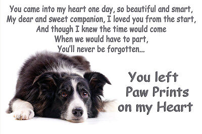 Border Collie Pet loss Bereavement Gift Paw Prints on heart fridge magnet