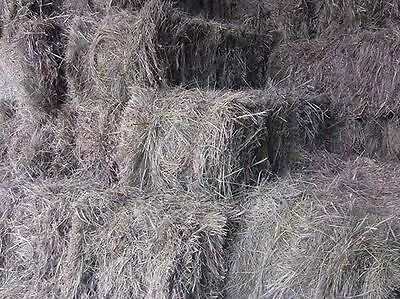 Hay Small Square Bales