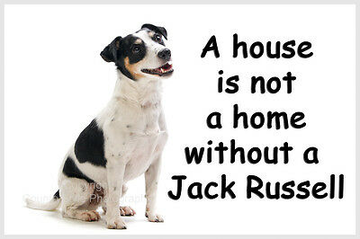 Jack Russell Terrier Dog Funny Fridge Magnet  Perfect New Birthday Gift