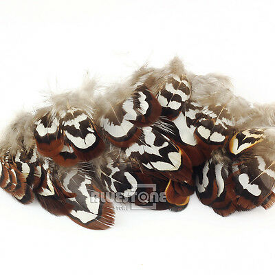 Lots Wholesale 100pcs Beautiful Natural Pheasant Feathers 2-3 inches