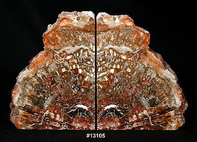 """Exquisite Petrified Wood Bookends 16"""" wide 10 1/4"""" high 1 7/8"""" thick, 20.8 lbs."""