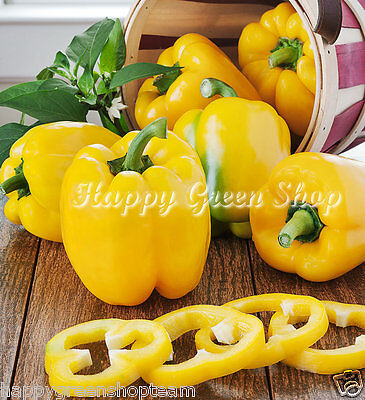 Vegetable - Sweet Pepper - Yellow Bell - 60 Seeds