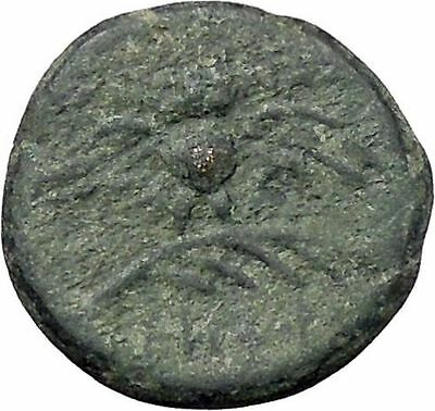 Pergamon in Asia Minor 133BC  Rare Ancient Greek Coin Athena Cult OWL  i47590