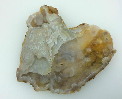 Agatized Fossil Coral 130222 Metaphysical Emotional Balance Healing