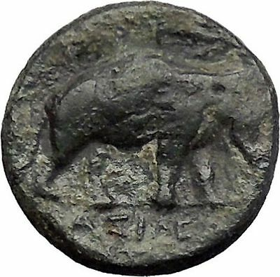ANTIOCHOS III Megas 222BC Medusa Shield Elephant SELEUKID Greek Coin i48633