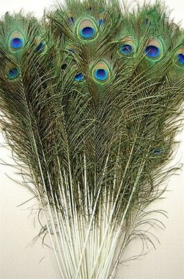 """50 Pcs PEACOCK TAILS Natural Feathers 45-50"""" Craft/Art/Bridal/Costume/Halloween"""