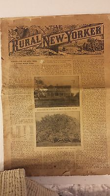 The Rural New Yorker February 4, 1911 Agriculture in English  News paper