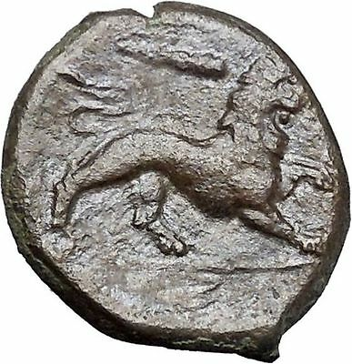 SYRACUSE Sicily 4th Democracy 289BC Hercules Nemean Leo Lion Greek Coin i49198