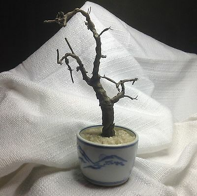antique asian Paper Mâché tree in blue white ceramic pot marked Japan Dirty Dust