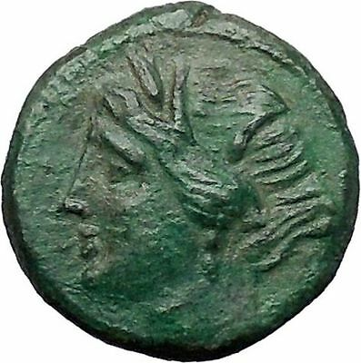 SYRACUSE in SICILY - HIERON II 275BC Bull Persephone Ancient Greek Coin i49177