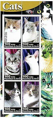 Domestic Cats Animals 6 stamp sheet / MNH Stamps