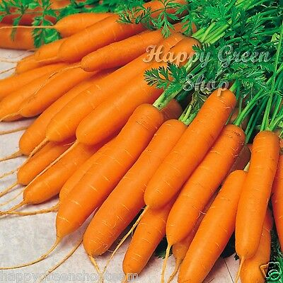 VEGETABLE - CARROT - 6 METERS SEED TAPE - Early Nantes 2 - 600 SEEDS